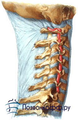 грыжа спины симптомы
